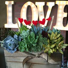 ❤️ Succulent Love ❤️