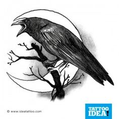 Crow and New Moon