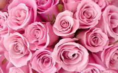 Pink roses can mean appreciation, admiration, gentleness, grace, thank you, perfect happiness, and please believe me