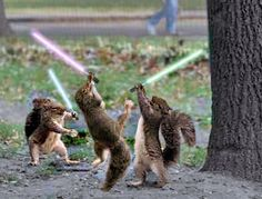 Squirrel Wars. What are the squirrels fighting about? Are other animals fighting or just the squirrels?