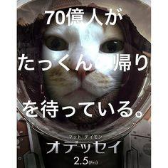 家で寝てるけど… #火星ひとりぼっちジェネレーター  #ねこ #猫 #catonekooooo2016/02/20 12:01:13