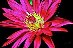 Australian Artist EM-DEE-EM Original Photograph ~ Digital Image ~ Marvel2 3015-2