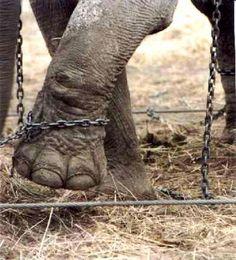 El elefante encadenado de Jorge Bucay