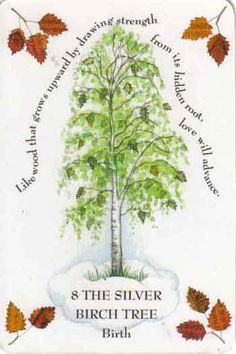 """Tree Magick by Gillian Kemp """"Your life is potentially graceful and well balanced like  the slender Silver Birch.  Mother Nature presides over this tree, bringing maternal protection, a deepening relationship with your mother, and the encouragement to learn new skills. Babies' cradles were made of Birch, signifying that an idea will materialize if it is nurtured.  Like the Silver Birch, which grows almost anywhere its seeds fall, you will make the most of opportunities."""