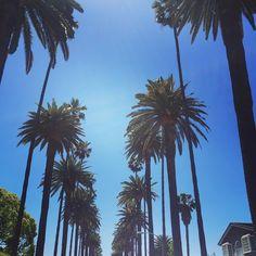 #beverlyhills on a perfect #sunny afternoon  #palmtrees #california #losangeles . . #lovebevhills #la #travelpics #westcoast #paradise #funinthesun #moments #visualsoflife #nothingisordinary #skyline #sunshine #lucky #lovemylife #hunterphoenix