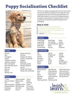 Large Dog Training Collar Dog Training Ohio Easy Dog Training