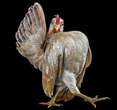 Winner, Best Runway Walk, Chicken and Fish Magazine, 2003   ...........click here to find out more     http://googydog.com