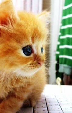 Adorable Ginger Kitty - Click to see loads of great pictures of cats and kittens to brighten your day.