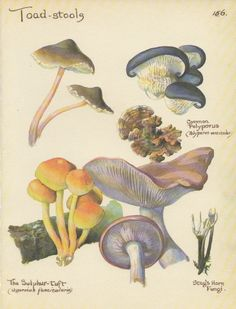 Mushrooms print vintage botanical print toadstools Autumn decor. $9.95, via Etsy.