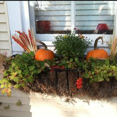 Fall Window box---love the idea of mini pumpkins and maybe some mums??