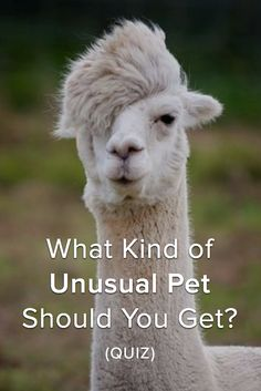 FUN QUIZ: What Kind of Unusual Pet Should You Get?