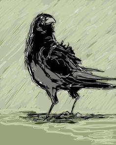 Crow In Rain Drawing - Crow In Rain Fine Art Print