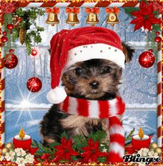 Hund pictures with dogs xmas