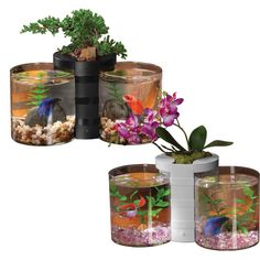 Do not put bettas in something this small! They need atleast a filtered and heated 5 gallon tank! Fish Care, Tanked Aquariums, Fish Tanks, Betta, Planter Pots, Nature, Animals, Aquariums, Naturaleza