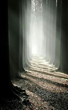penombra tra gli alberi - fotografia in bianco e nero/ black and white photography. Just beautiful. Landscape Photography, Nature Photography, Mysterious Photography, Landscape Pics, Photography Pics, Photography Classes, Product Photography, Light And Shadow, Pathways