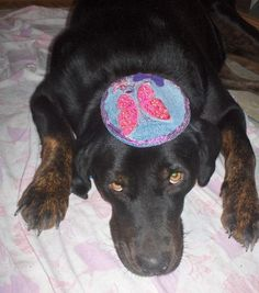 A kippah for your pooch - it's a bark mitzvah!