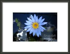 Blue Water Lily Star Sun And Clouds Framed Print By Layla Alexander - framing idea