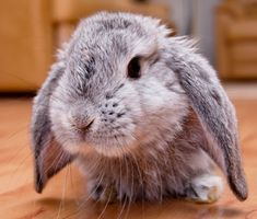 Can a Rabbit Live With a Dog or a Cat?