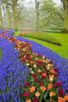 Keukenhof Gardens, near Amsterdam, Netherlands. Peach and maroon tulips. Parks, Beautiful Landscapes, Beautiful Gardens, Beautiful Flowers, Beautiful Places, Flora, Tulips Garden, Dream Garden, Garden Inspiration