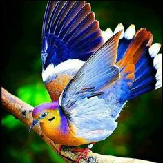 FRUIT DOVE  I  AM  IN  AWE OF GOD'S  BEAUTIFUL CREATIONS....     <3
