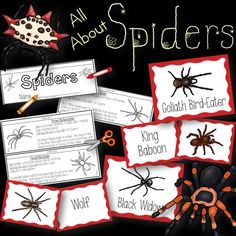 All About Spiders! Included are 12 spider posters.There are 24 cards with spider pictures and names. Can be used for a science center, pocket chart activity, or to play memory. Also included is a spider flip book. Cut out, assemble, color, read, and enjoy! Spiders included in this set are: Black Widow Brown Recluse Funnel Web Goliath Bird-Eater Hobo King Baboon Mouse Redback Sac Spiny Orb Weaver Tarantula Wolf