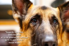 """""""Regarde ton chien dans les yeux et tu ne pourras pas affirmer qu'il n'a pas d'âme."""" Victor Hugo Victor Hugo, Animals And Pets, Cute Animals, Image Fun, Animal Totems, Love Pet, Worlds Of Fun, Safari, Corgi"""