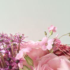 Pink flowers | Peet likes