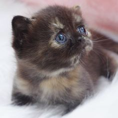 Kittens And Puppies, Baby Kittens, Cute Cats And Kittens, Kittens Cutest, Cute Baby Animals, Animals Beautiful, Animal Rescue, Cute Babies, Humor