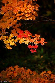 El otoño.  La montaña oscurece y asume la púrpura magnificencia de las hojas en otoño.