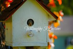 Squirrel house  www.facebook.com/WilloughbyReflections