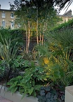 Small urban garden with Betula, palms and ferns, London