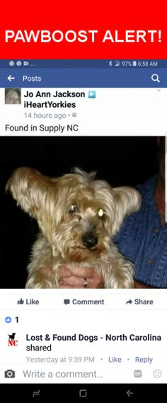 Is this your lost pet? Found in Supply, NC 28462. Please spread the word so we can find the owner!  Yorkshire Terrier, contact person at top of original Facebook post pic, on facebook I have no other information just sharing  Near Stone Chimney Rd SE & Blanton Rd SE