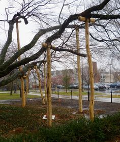 A series of tree crutches supporting limbs of a Japanese Maple tree