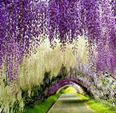 Kawachi Fuji Gardens, Japan