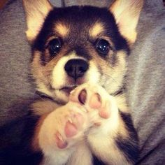 cute-baby-dog-bébé-chien