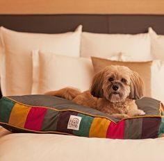 Fido Looks Pretty Content In This Plush Bed Right Orlando Pet Friendly Hotels