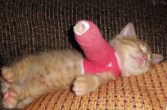 look at the poor little kitty :(