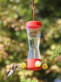 How Sweet It Is! Explore the Roles of Color and Sugar Content in Hummingbirds' Food Preferences.