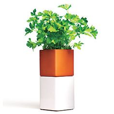 Editor's 8: May 2012 | Cult Design Self-Watering Planter | CookingLight.com