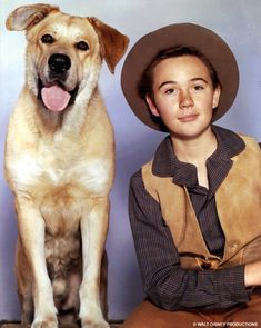 Disney's Old Yeller: The classic movie about the best doggone dog in the west (1958) Family Movie Reviews, Old Yeller, Chuck Connors, Action Film, Woodland Creatures, Bad Timing, Vintage Movies, Pet Birds, Little Boys