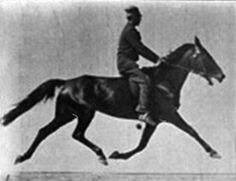 Muybridge horse pacing animated.gif ... Photos taken by Eadweard Muybridge, first published in 1887 at Philadelphia (Animal Locomotion).