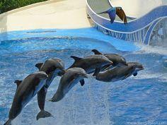 Seaworld, Florida