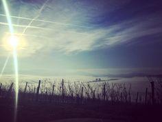 it's not snow just the sea of fog :) #nebbia #lamorra #todays #fog #autumn #waytowork #vineyard #sun #morning #oggi #piedmont #piemonte #langhe #nebbiolo