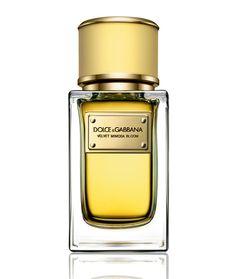 Parfum de l'été : Velvet Mimosa Bloom de Dolce & Gabbana http://www.vogue.fr/beaute/shopping/diaporama/les-10-parfums-de-lt/21295#velvet-mimosa-bloom-de-dolce-gabbana
