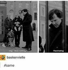 The Curious Incident Of the Dog in the Night-time Sherlock Holmes Benedict Cumberbatch, Sherlock Holmes Bbc, Sherlock Fandom, Sherlock John, Watson Sherlock, Jim Moriarty, Sherlock Quotes, Supernatural Fandom, Martin Freeman