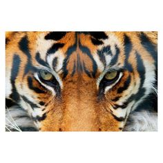 Ideal Decor Tiger Wall Mural - DM608