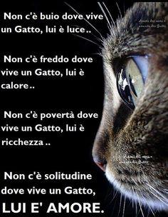 Crazy Cat Lady, Crazy Cats, I Love Cats, Cute Cats, Neko, Puppies Gif, Animals And Pets, Cute Animals, Foto Fantasy