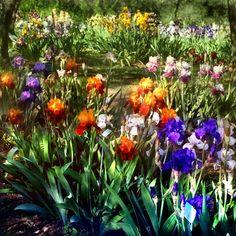giardino_dell_iris