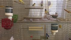 Why an Aviary Bird Cage is a Wonderful Choice : Cage And Aviary Birds Subscription. Cage and aviary birds subscription. Bird Types, Bird House Kits, Bird Aviary, Easy Coffee, How To Attract Birds, Kit Homes, Floor Space, Bird Cage, Exterior Paint