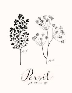 Gorgeous parsley illustration by Eva Juliet